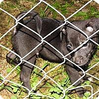 Adopt A Pet :: Tony - Bel Air, MD