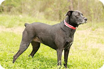 Labrador Retriever Mix Dog for adoption in Marietta, Georgia - Sadie
