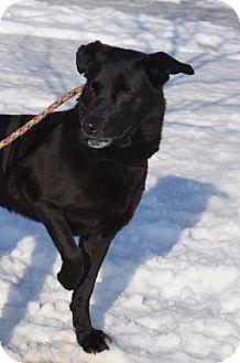 Labrador Retriever Mix Dog for adoption in Bellefontaine, Ohio - Leslie