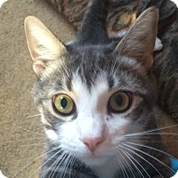 Adopt A Pet :: Stitch - Winchester, CA