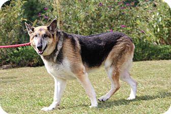 German Shepherd Dog Mix Dog for adoption in Portland, Maine - Rhett