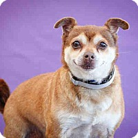 Adopt A Pet :: Candy - Los Angeles, CA