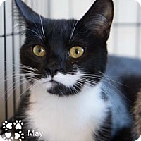 Adopt A Pet :: May - Merrifield, VA
