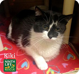 Domestic Mediumhair Cat for adoption in Oakville, Ontario - Kiki