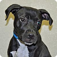 Adopt A Pet :: Snoopy - Port Washington, NY