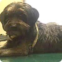 Adopt A Pet :: Cody-ADOPTION PENDING - Boulder, CO