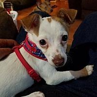 Adopt A Pet :: Kiko - Joliet, IL