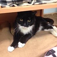 Adopt A Pet :: Tarragon - Byron Center, MI