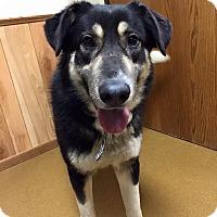 Adopt A Pet :: Duke (P4P Graduate) - Maryville, MO