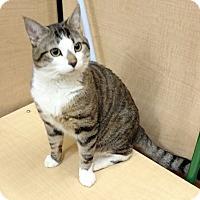 Adopt A Pet :: Pip - Colmar, PA