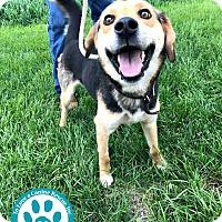 Adopt A Pet :: Hamlet - Kimberton, PA