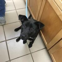Adopt A Pet :: Catalina - Amory, MS