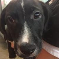 Adopt A Pet :: Kenney - Winchester, TN