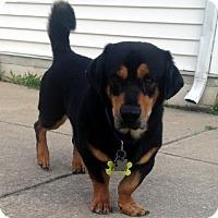 Adopt A Pet :: FLIPPER - Pennsville, NJ