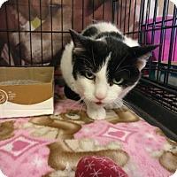 Adopt A Pet :: Kassia - Avon, OH