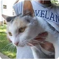 Adopt A Pet :: PollyAnna - Warren, OH