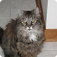 Adopt A Pet :: Bonnie Raitt - Port Republic, MD