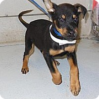 Adopt A Pet :: Brandy - Justin, TX