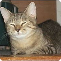 Adopt A Pet :: Katrina - Oxford, CT