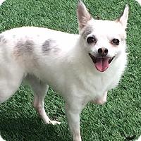 Adopt A Pet :: ELSA - Los Angeles, CA
