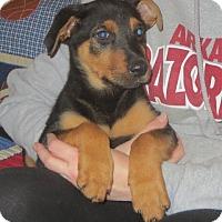 Adopt A Pet :: Ruth - Salem, NH