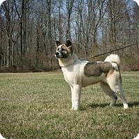 Adopt A Pet :: Emiko - Toms River, NJ