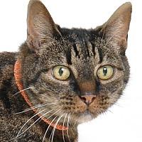 Adopt A Pet :: Oreo - Roseville, CA