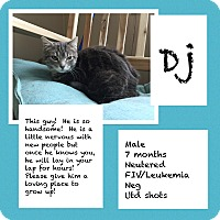 Adopt A Pet :: DJ - CLEVELAND, OH