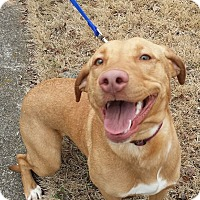 Adopt A Pet :: Pippa - Knoxville, TN