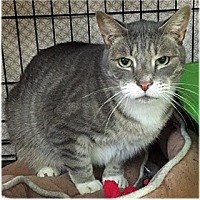 Adopt A Pet :: Leon - Milford, MA