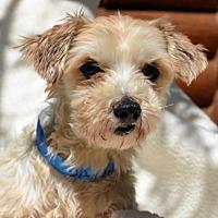 Adopt A Pet :: David - Pueblo, CO