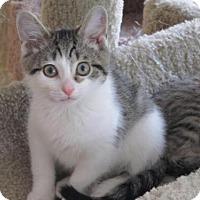 Adopt A Pet :: Praline - Cincinnati, OH