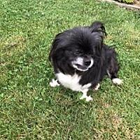 Adopt A Pet :: Tinkerbelle - N. Babylon, NY