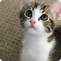 Adopt A Pet :: London - Mission Viejo, CA