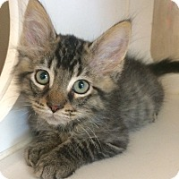 Adopt A Pet :: Baby - Breese, IL