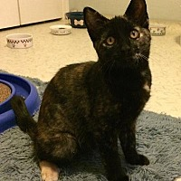 Adopt A Pet :: Vibia - Half Moon Bay, CA
