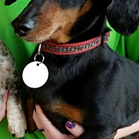 Adopt A Pet :: Nathan - Chesterfield, MO