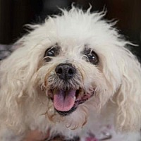 Adopt A Pet :: Snuggles - Chester Springs, PA