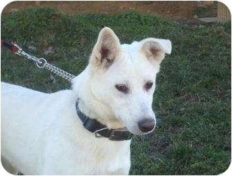 German Shepherd Dog Mix Dog for adoption in Windham, New Hampshire - Roxy