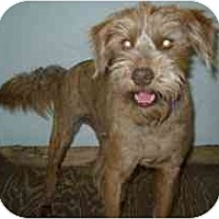 Adopt A Pet :: Chewy - Dodge City, KS