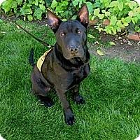 Adopt A Pet :: Rooney - Phoenix, AZ
