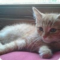 Adopt A Pet :: Gemini - Grand Rapids, MI