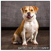 Adopt A Pet :: Paisley - Owensboro, KY