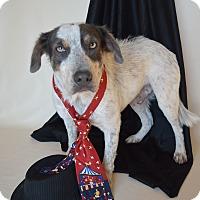 Adopt A Pet :: Moki - Aurora, CO