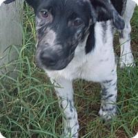 Adopt A Pet :: McGhee - Ball Ground, GA