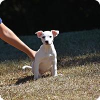 Adopt A Pet :: Luna - South Dennis, MA