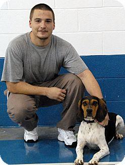 Treeing Walker Coonhound/Beagle Mix Dog for adoption in Newland, North Carolina - Virginia