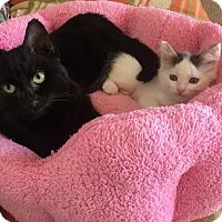 Adopt A Pet :: Cindy Lou Hoo - Toledo, OH