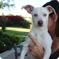 Adopt A Pet :: Georgie - Brea, CA