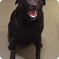 Adopt A Pet :: Kara - North Haven, CT